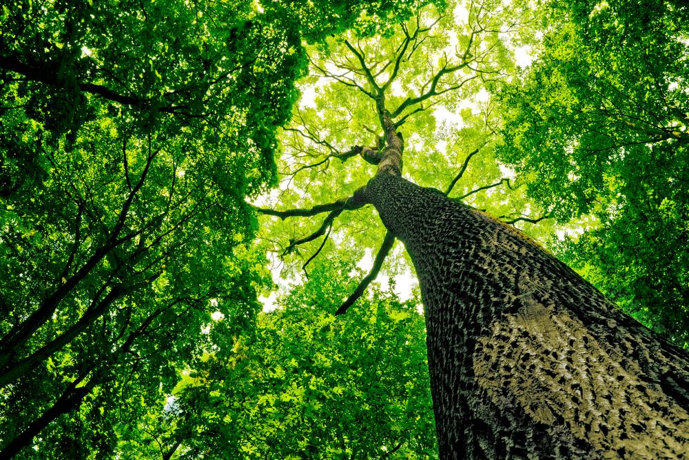 Bosques atrapan más CO2 que hace 50 años | Sustentabilidad
