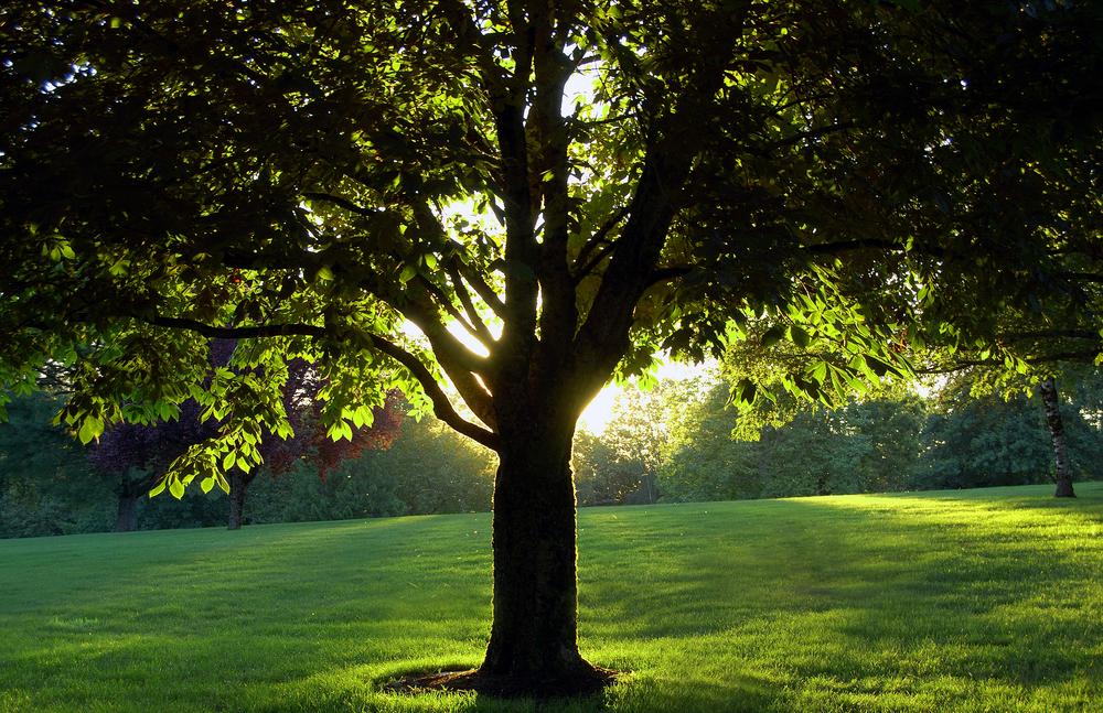 Cinco beneficios que aportan los rboles sustentabilidad for Cuanto miden los arboles