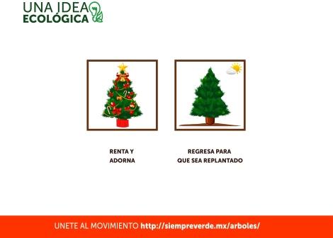 re planta tu pino de navidad