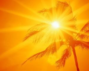 Yellow-Oahu-Hawaii-Light-Palm-2048x2560