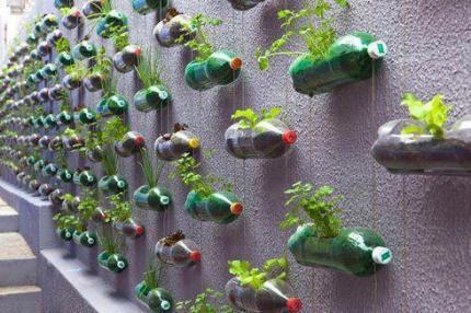 botellas con plantas