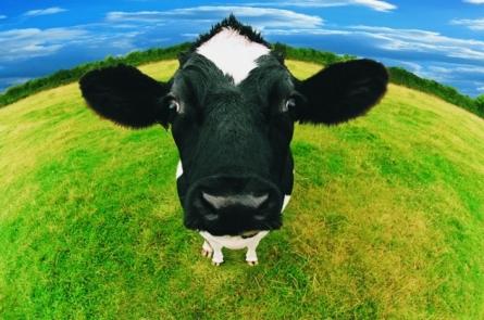 Los-gases-de-las-vacas-contaminan-Mitos-y-verdades