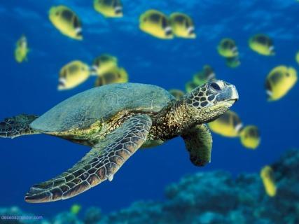 Una tortuga de mar verde nadando cerca de un banco de peces mari