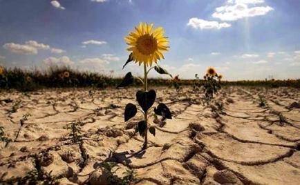 calentamiento-global-ecosistemas