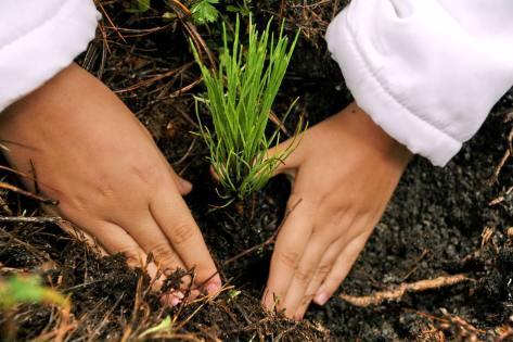 reforestacion-con-manos