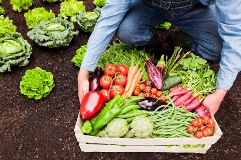 Dietas sustentables