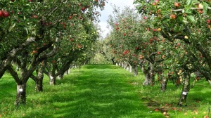 Campo-de-frutas