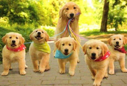 paseo-perritos