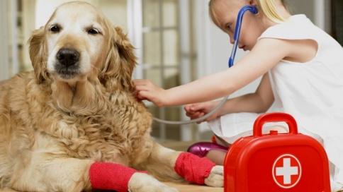 kit-botiquin-emergencia-urgencia-medica-perro-pet-mascota-nina-animal