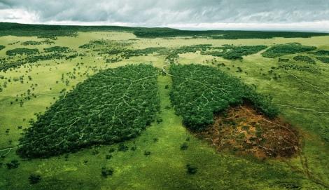 01-deforestacion