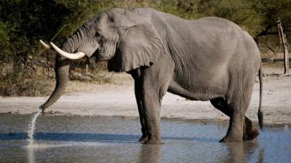 como-nacen-los-elefantes