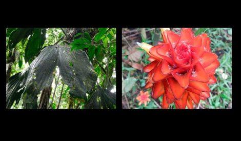 colombia_descubren_especies_florales_486586458645