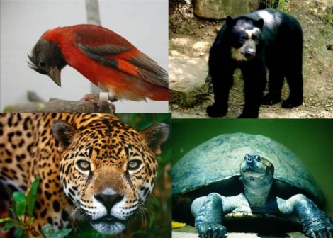 animales-en-extincion-vzlano2.jpg