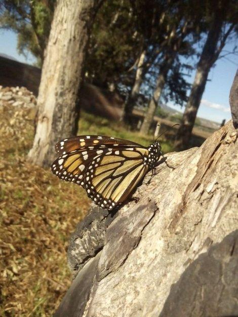 monarca1.jpg