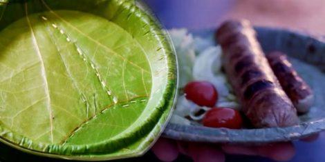 Platos-desechables-hechos-de-hojas-de-árboles3