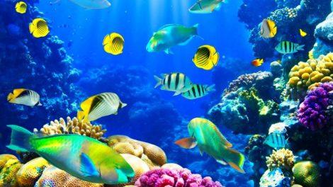 peces_oxigeno_encuentran_486586456845