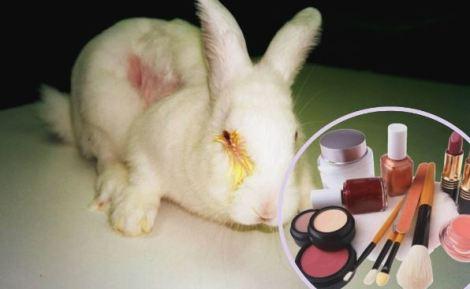 animales_cosmeticos_48658645864586458645